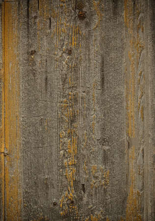 Old weathered wood plank with yellow moss photo