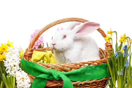 Still life of Easter bunny in basket photo