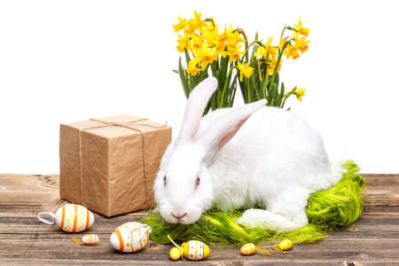 Easter decoration with eggs, narcissus flowers and bunny  photo