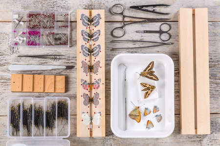 Butterflies and tools used to preserve