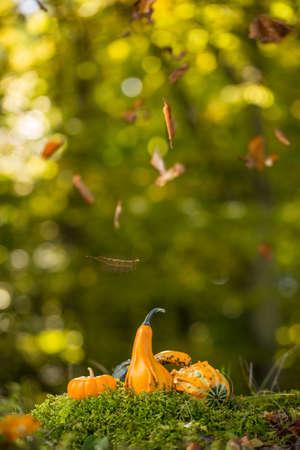 outdoor shot: Pumpkins in autumn leaves, outdoor shot