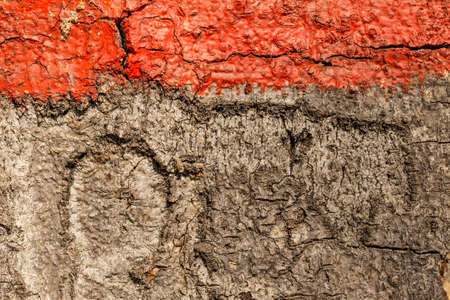 close up image: Close up image of red band painted on tree Stock Photo