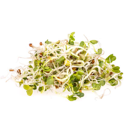 bean sprouts: Fresh sprouts isolated on white background