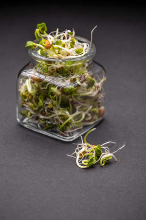 germinate: Fresh sprouted seeds in jar on black background