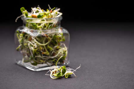 sprout: Mix of fresh sprouts in glass jar