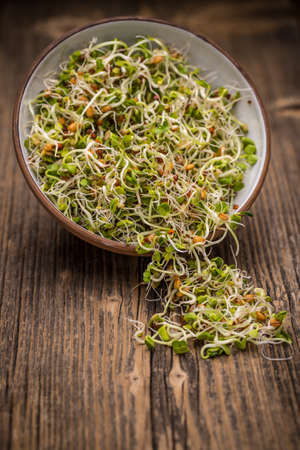 germinate: Sprouted alfalfa, radish, wheat and mustard seeds in bowl