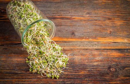 sprout: Fresh sprouted seeds with space for text Stock Photo