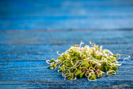 sprouted: Heap of sprouted radish seeds on blue wooden background