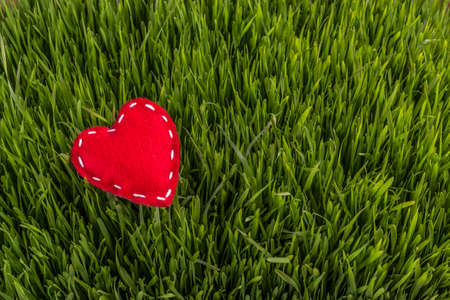 hand crafted: Hand crafted red felt heart on green grass background