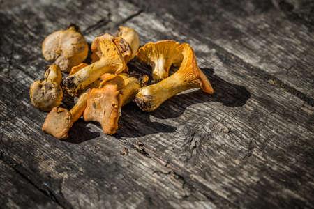 cantharellus cibarius: Cantharellus cibarius, commonly known as the chanterelle Stock Photo