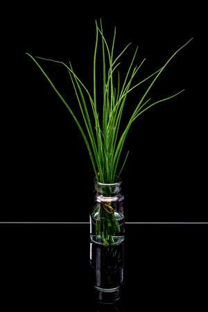 cebollin: El manojo de cebolletas frescas sobre fondo negro