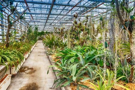 glasshouse: Interior botanic glasshouse building, greenhouse complex