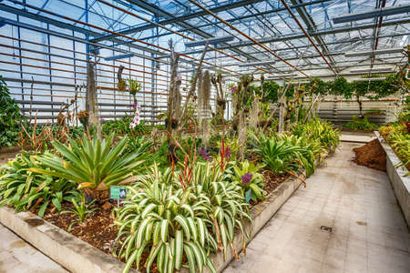 botanical farms: Orchid greenhouse, interior botanical greenhouse Stock Photo