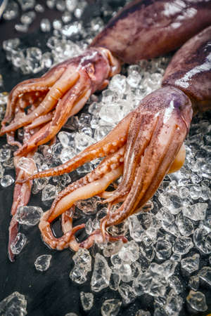 Fresh cuttlefish with ice on blackbackground Stock Photo