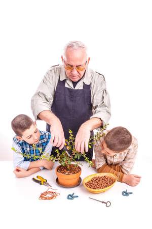 Senior man with his grandchildren taking care of bonsai plant