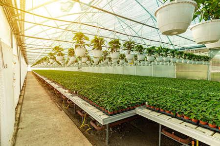 Modern hydroponic greenhouse Stock Photo