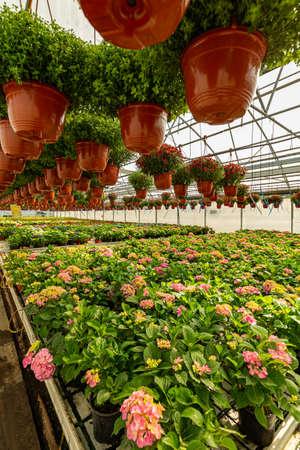 Ornamental plants and flowers Фото со стока