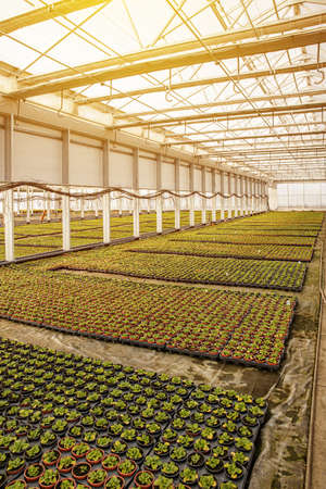 Floriculture industry concept Stockfoto