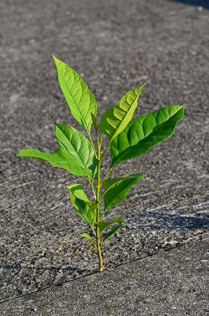Potenza della Natura