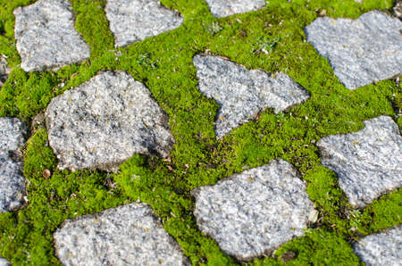 detail of cobblestones and mossy gaps Stock Photo