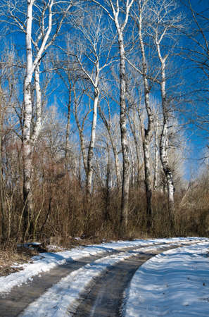 snowy path through forest Stock Photo - 18285501