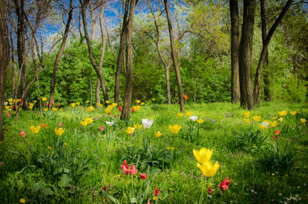 mystic forest with flowers Stock Photo - 19635694
