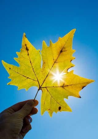 Foglio di autunno contro il sole