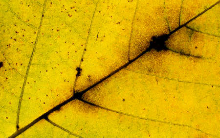autumnal leaf detail Stock Photo
