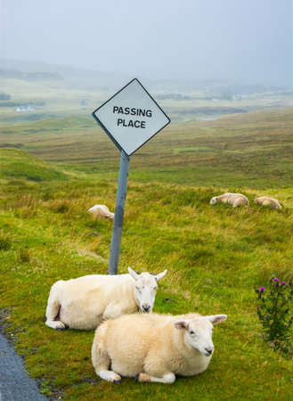 Sheep passing place