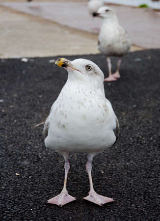 Seagull waiting for some feed