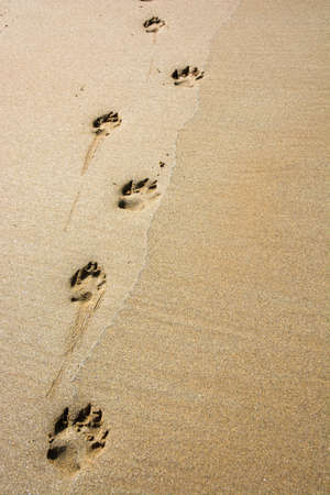 Path of a dog in the sand