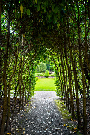 Stretto sentiero in un bosco verso un prato illuminato dal sole