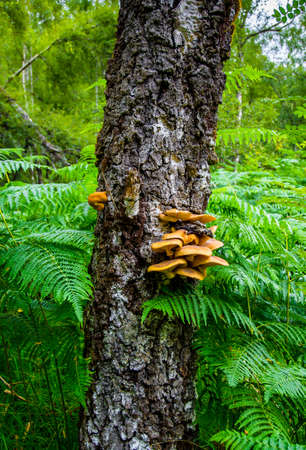 Mushrooms in a scottish forest