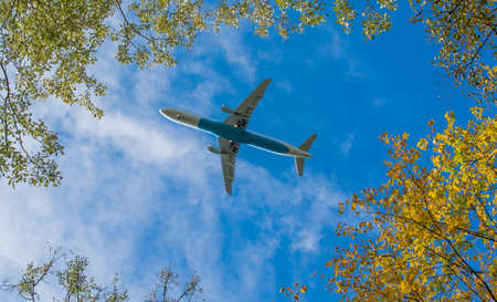 Plane beneath trees Stock Photo