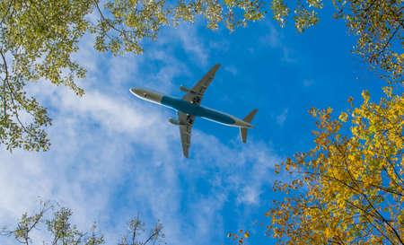 Plane beneath trees Imagens