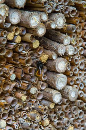 Pile di canna con l'allevamento delle api Archivio Fotografico