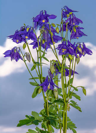 Blooming Larkspur