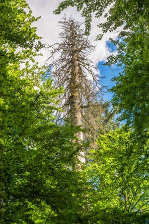 Albero morto in un vecchio legno