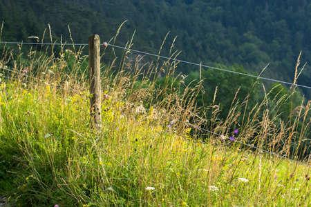 Electric Fence con Pascolo Blooming Archivio Fotografico
