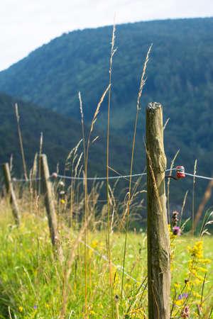 elektrischer Zaun: Electric Fence mit bl�henden Weide Lizenzfreie Bilder
