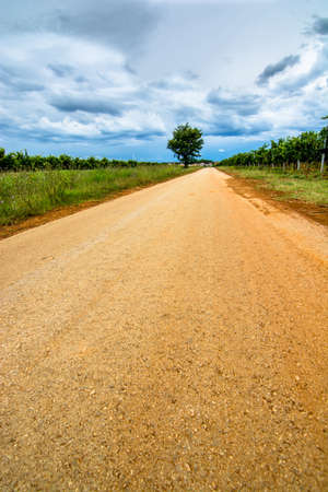 Deserted Road with Tree and Cloudy Sky photo