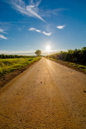 Sun at the End of a Deserted Road with Tree photo