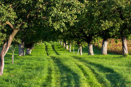 Grassy Road through a Sunlit Alley photo