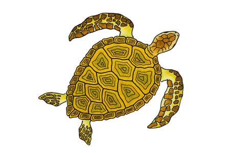 Isolata Sea Turtle Drawing