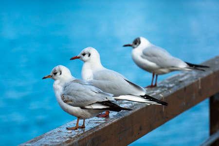 banister: Relaxing Seagulls On Banister Stock Photo