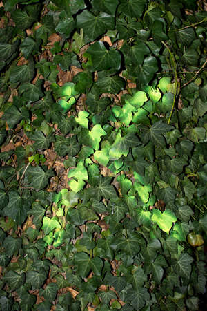 cross mark: Green Cross Mark On Ivy Leaves Stock Photo