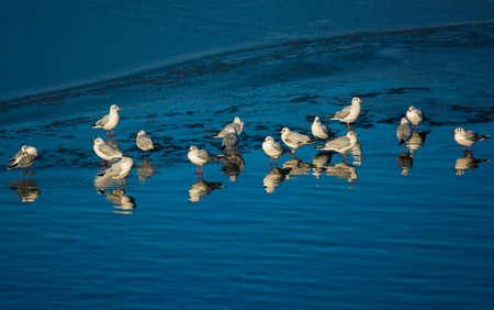 Gabbiani On Frozen Lake Archivio Fotografico