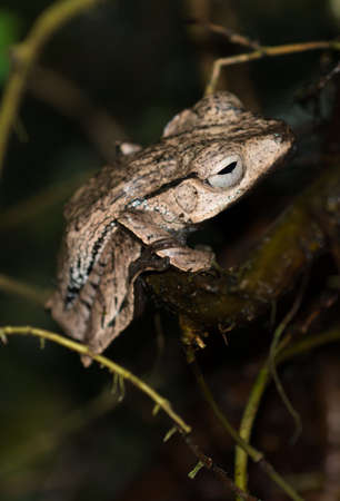 Brown Frog On Branch