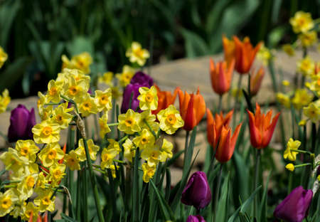 Spring Flowers In Park photo