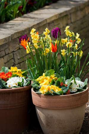Spring Flowers in Flower Pot photo
